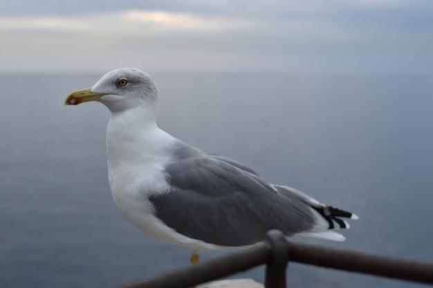 Крупный план чайки на морском пейзаже