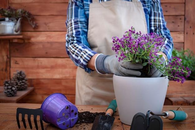 ガーデニングと新しい紫色の花を植えている間、エプロンと手袋で高齢者のクローズアップ。木製の素朴な背景とテーブル