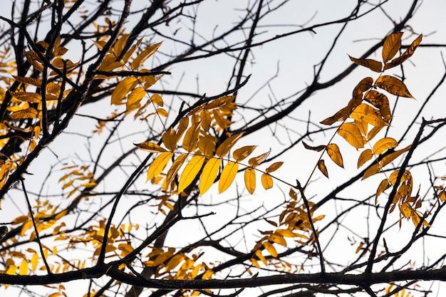 Крупный план небольшого количества пожелтевшей листвы деревьев в осенний сезон. солнце освещает растения спиной, подсветкой. небо на заднем плане