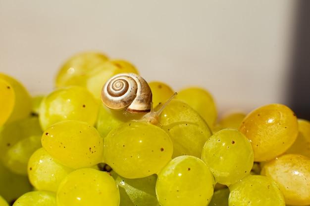 Крупный план маленькой улитки, ползающей по виноградному пирогу с заварным кремом