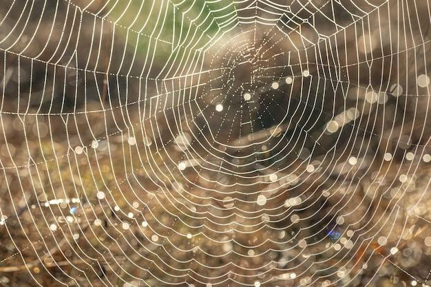 晴れた早朝に野原に露の蜘蛛の巣のクローズアップ。