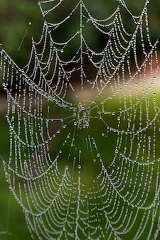 녹색 배경에 빗방울이 있는 거미줄의 클로즈업. 거미줄 또는 거미줄 자연 비 패턴 배경을 닫습니다. 거미줄 목걸이