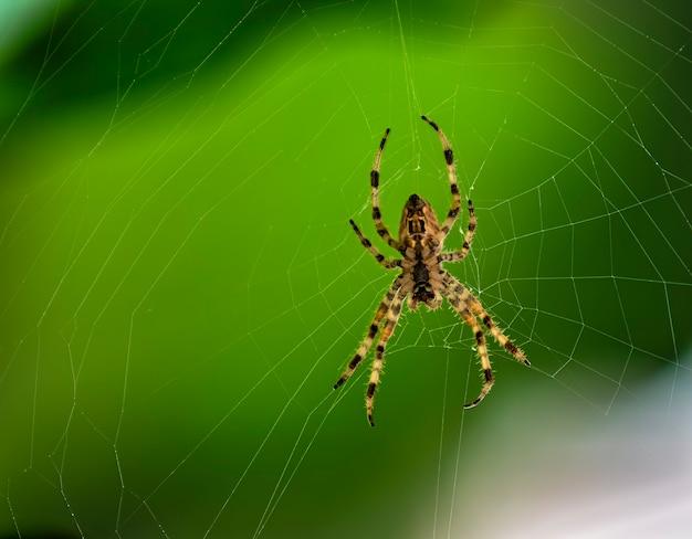 거미의 클로즈업