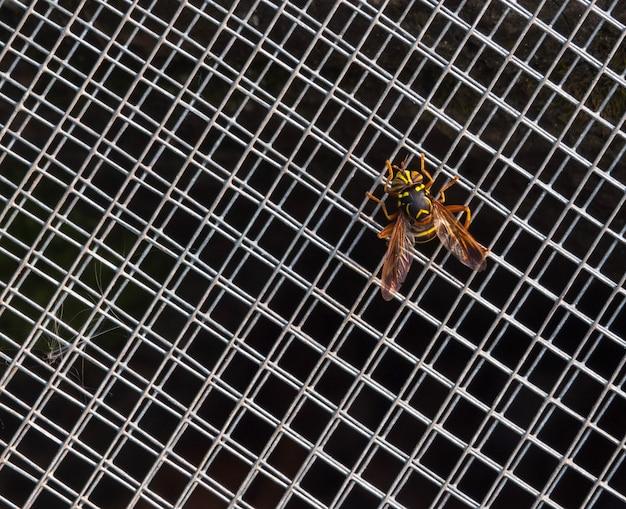 Заделывают жгучей осы, сидящей на сетке