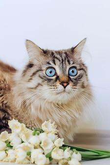 白い壁の背景に美しい白いスノードロップの近くに座っている驚いた猫のクローズアップ