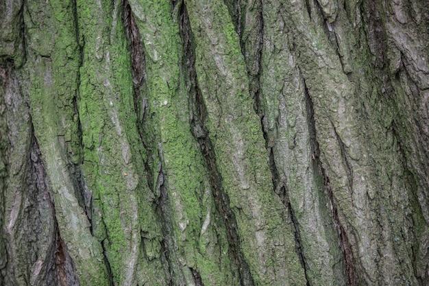 녹색 이끼로 자란 나무 껍질의 클로즈업