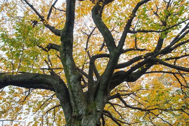 秋の木のクローズアップ