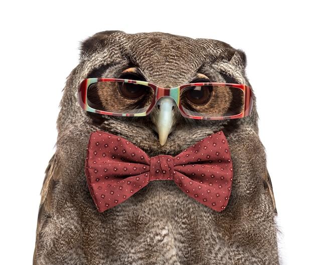 クロワシミミズクのクローズアップ-白い表面の前で眼鏡と蝶ネクタイを身に着けているbubolacteus(3歳)