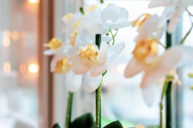 ソフトフォーカスの背景のウィンドウで白い蘭の花のクローズアップ