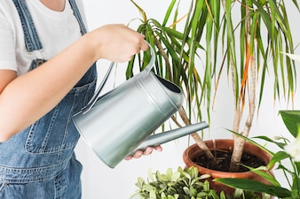 Close-up of a woman's hand pouring water in potted plant