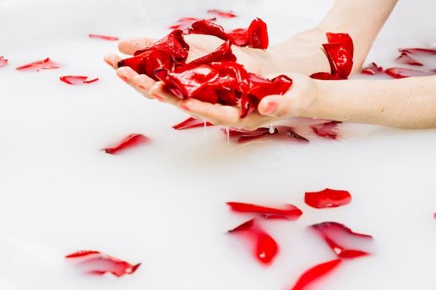 우유와 함께 스파 욕조에 붉은 꽃 꽃잎을 가진 여자의 젖은 손 클로즈업