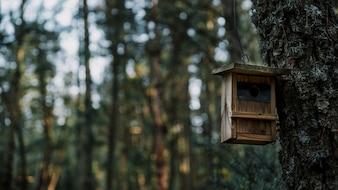 Close-up of a wooden bird feeder