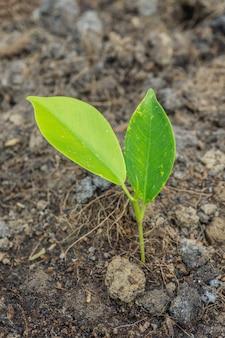 土壌から若い植物のクローズアップ