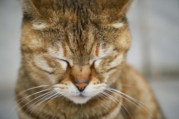 Крупным планом очаровательны кошки с закрытыми глазами