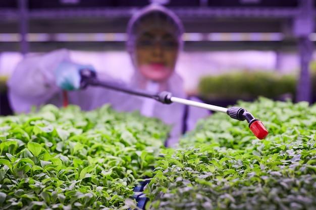 植物の苗床で働いている間、緑の芽の上に肥料を噴霧する農業技術者のクローズアップ、コピースペース