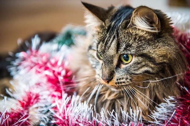 Очаровательная кошка смотрит в сторону крупным планом