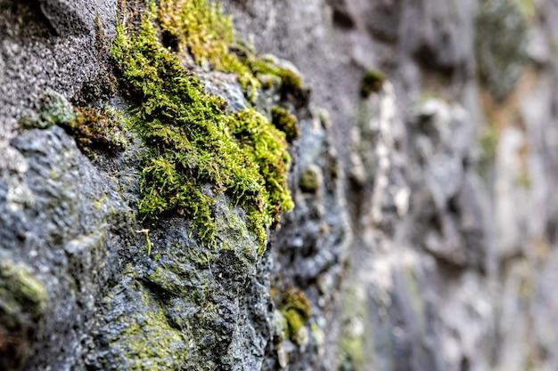 Крупный фрагмент древней крепостной стены, швейцария