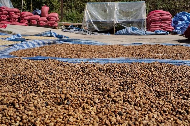 Крупный план обработанных и сушеных кофейных зерен арабика