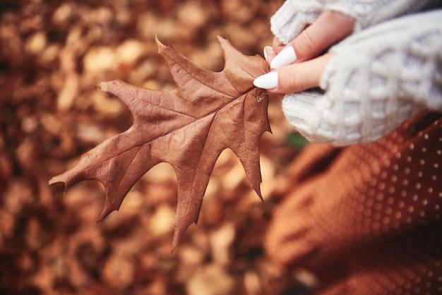 Крупным планом осенний лист в руках в лесу
