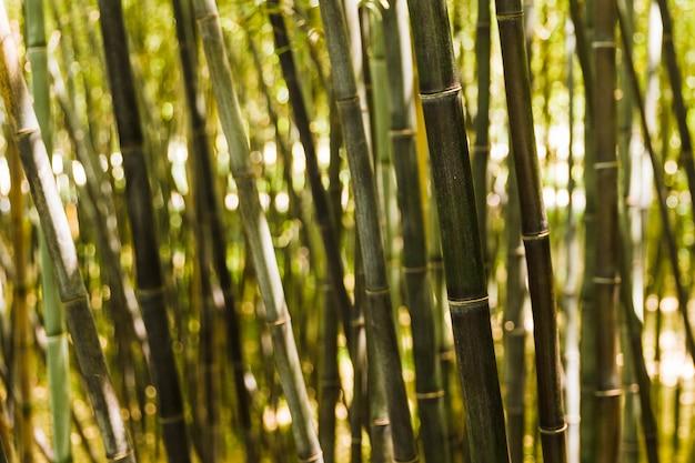 대나무 줄기의 클로즈업