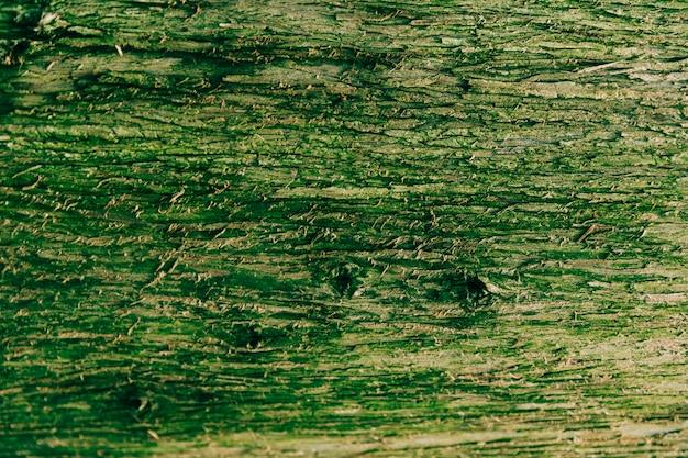 緑色の苔で覆われた樹皮のクローズアップ