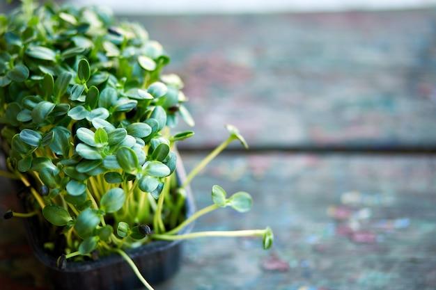 箱の中のバジルヒマワリのクローズアップ、マイクログリーンの発芽、家庭での種子の発芽、ビーガンと健康的な食事のコンセプト。