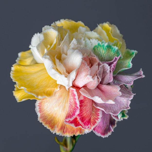 아름 다운 피어 꽃의 근접 촬영