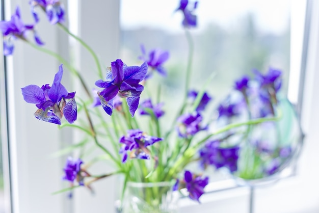 窓の花瓶の美しい青紫の菖蒲のクローズアップ
