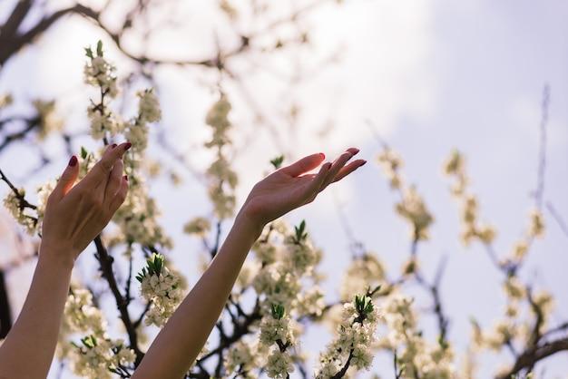 開花果樹と花の枝を保持している美しい女性の手のクローズアップ。繊細な春の背景。