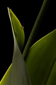 美しい緑の葉のクローズアップ