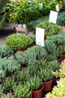 Крупным планом красивых зеленых растений для продажи в садовом центре с пустыми бирками для макета