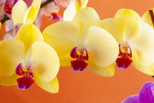 美しい蘭の花のクローズアップ
