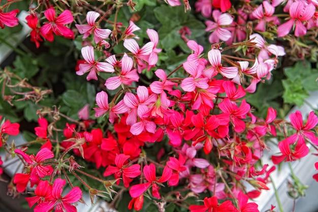 Крупным планом красивый розовый цветочный фон