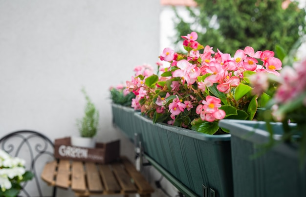 Закройте красивые розовые цветы на балконе