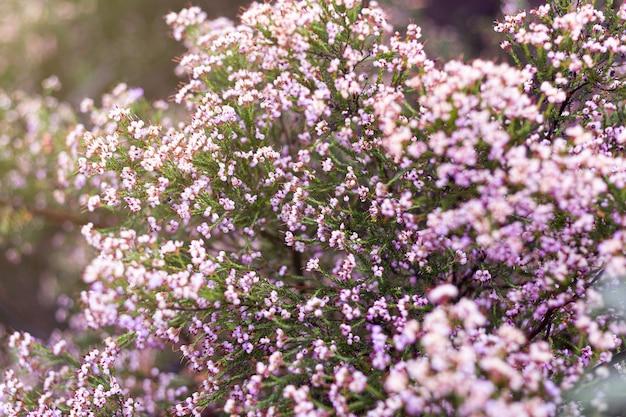 春の間に畑に生えている美しいピンクの杢の花のクローズアップ