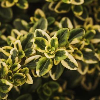 아름 다운 식물 잎의 클로즈업