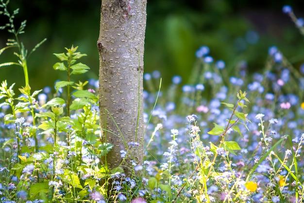 Конец-вверх красивых нежных одичалых голубых и желтых малых цветков осветил солнцем лета щедро зацветая под стволом дерева на запачканной темной ой-зелен предпосылке bokeh. красота и гармония природы концепции.