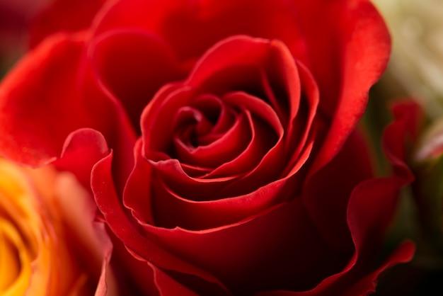 아름답게 피어난 장미 꽃의 근접 촬영