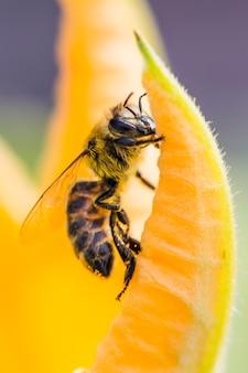 花に蜂のクローズアップ