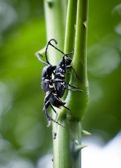 나뭇가지에 딱정벌레의 근접