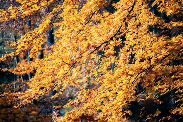 黄色と緑の葉に囲まれた非常に古い木の大きな根のクローズアップ