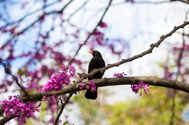 夏の公園の木に座っている金色のくちばしと黒い鳥のクローズアップ