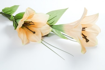 Close-up of blooming lilies