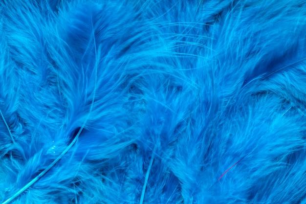 青い羽のクローズアップ