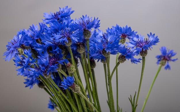 블루 수레 국화의 꽃다발의 클로즈업