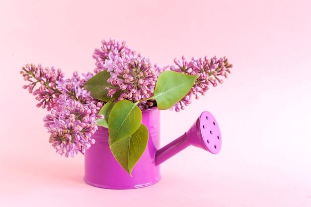 분홍색 종이 배경에 분홍색 물을 수있는 신선한 향기로운 분홍색 라일락의 꽃다발 닫습니다