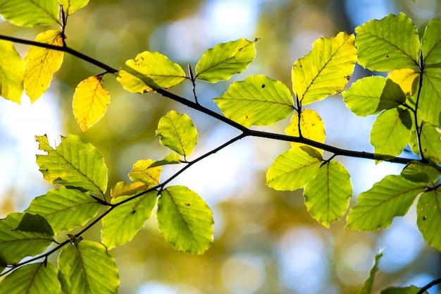 Закройте вверх ярких живых желтых листьев на ветвях дерева в парке осени. деталь осенью лесной листвы.