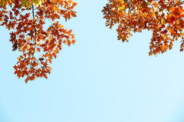 Закройте вверх ярких желтых и красных кленовых листов на ветвях дерева падения с живой запачканной предпосылкой в парке осени.