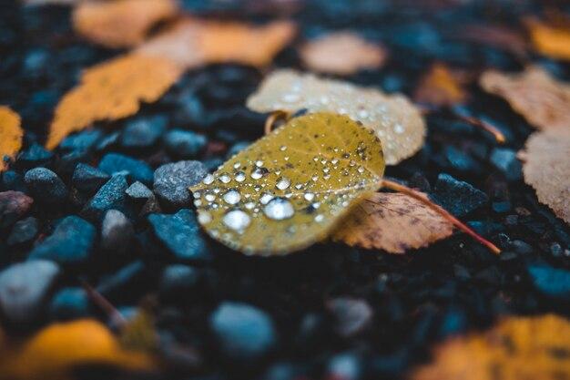Dewdrops와 갈색 잎의 클로즈업