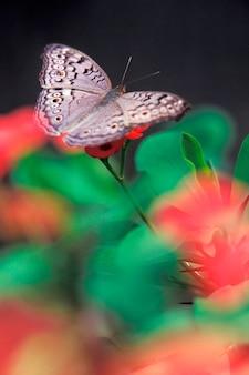 나비 클로즈업